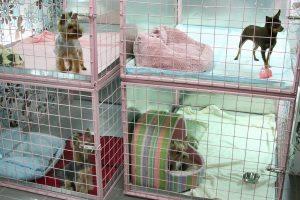 Гостиница для передержки животных