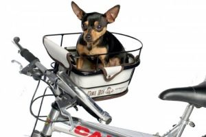 Велосипедная перевозка для собаки