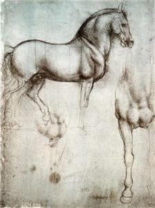 Наброски коня